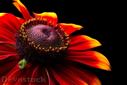 Devostock Colourful Flower Pollen 116551 4K