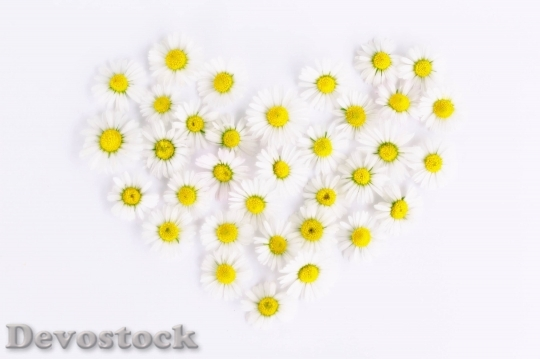 Devostock Daisy Heart Daisy Heart Love 15977 4K.jpeg