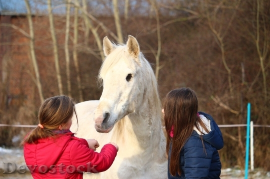 Devostock Friendship Two Girl Horse Love 4k