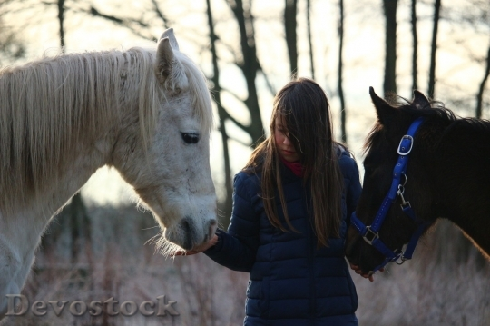 Devostock Friendship Two Horses Girl Love HQ
