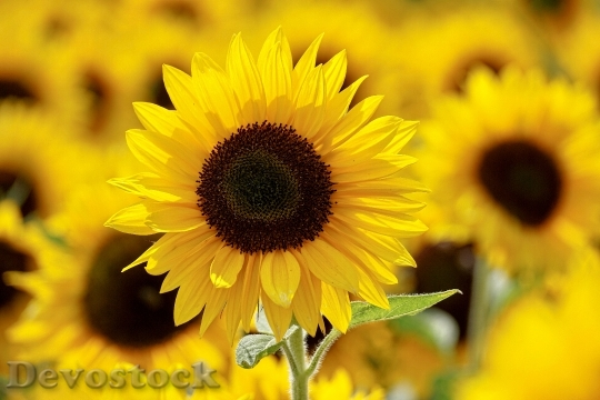 Devostock Nature Sunny Flowers 116984 4K