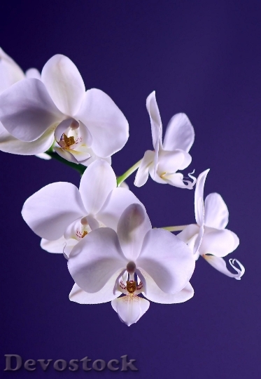 Devostock Orchid Flower Plant Exotic 4044 4K.jpeg