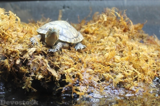 Devostock Turtle Moss Animal Nature HD