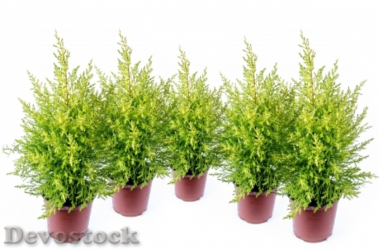 Devostock Alone Background Branch Christas 0 4K