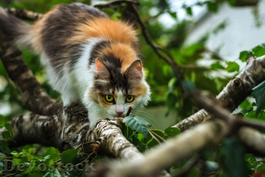 Devostock CAT WATCHING TREE BRANCH