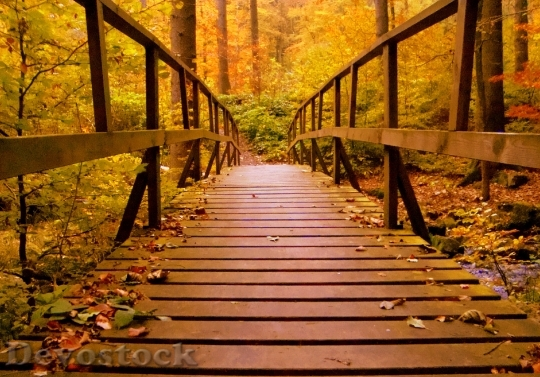 Devostock Forest Bridge Trees 63881 4K