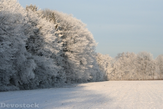 Devostock Frozen Treetops Winter Wnter 4K