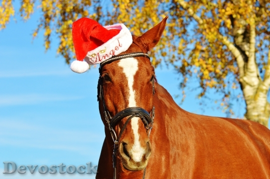Devostock Horse Christmas Santa at 1 4K