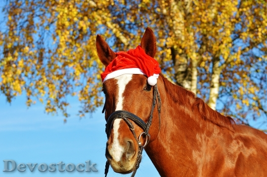Devostock Horse Christmas Santa at 4 4K
