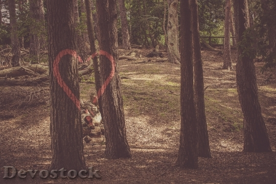 Devostock Landscape Nature Heart 58977 4K