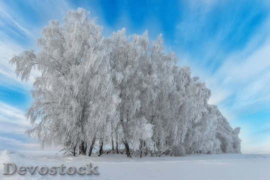Devostock LANDSCAPE WINTER TREES