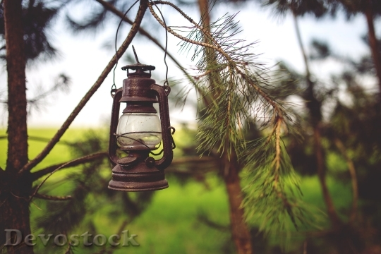 Devostock Light Nature Vintage Tree 4K