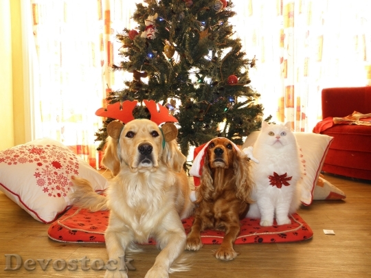 Devostock Pets Christmas Dog Cat 4K