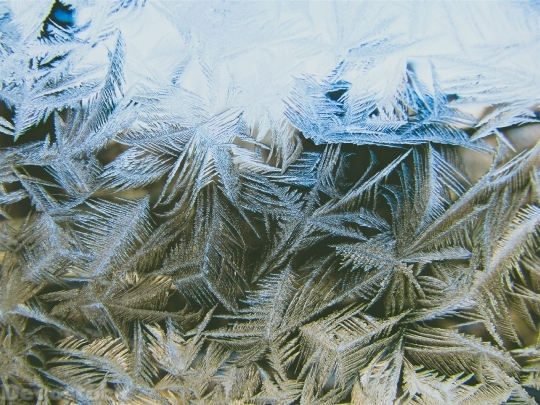 Devostock Pine Leaves Frozen Frezing 4K
