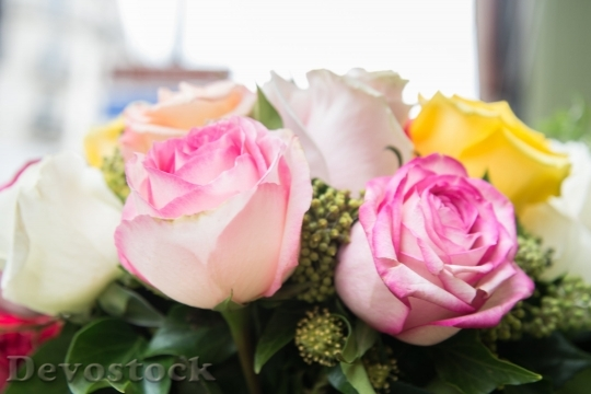Devostock Rose Flower Pink Yellow 69177 4K.jpeg
