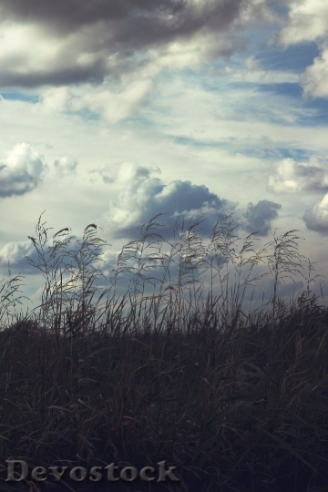Devostock Sky Clouds Thicket Scenery 4K