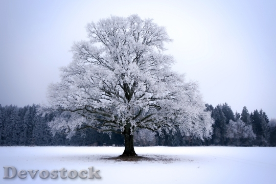 Devostock SNOW TREE WINTER LANDSCAPE