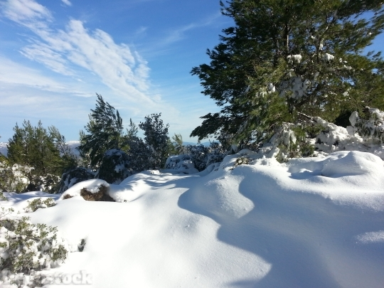 Devostock Snow Winter MountainPine 4K