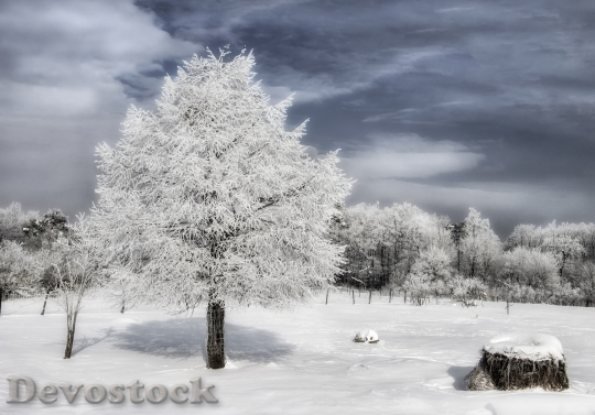 Devostock WINTER LANDSCAPE COVERED SNOW