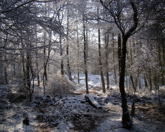 Devostock Winter Scene Woodland Frest 4K