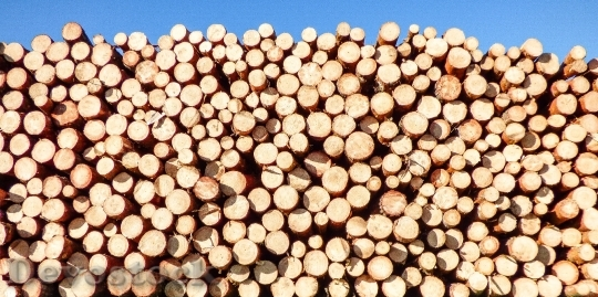 Devostock Wood Dry Industry 24701 4K