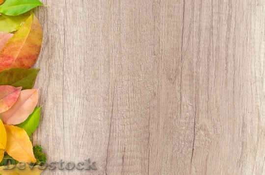 Devostock Wood Dry Leaves 62881 4K