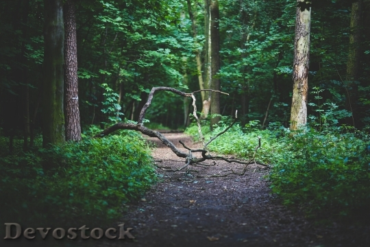 Devostock Wood Nature Forest Path 4K