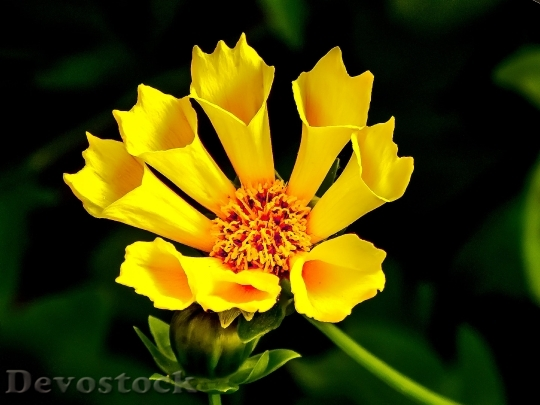 Devostock Yellow Flower Yellow Flower Cone Flower 6037 4K.jpeg