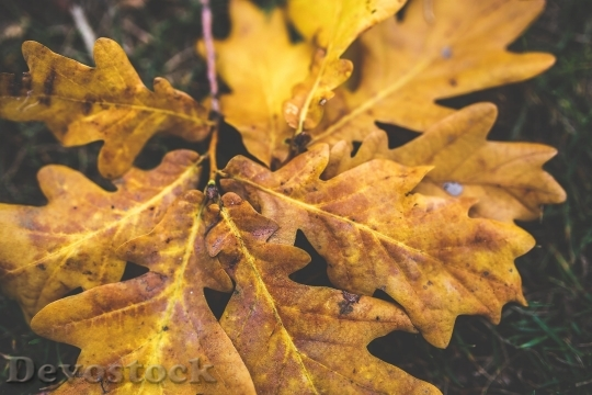 Devostock Yellow Leaf Leaves Aumn 4K