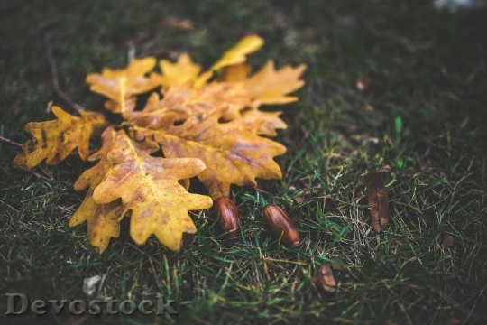Devostock Yellow Leaf Leaves Autumn 4K