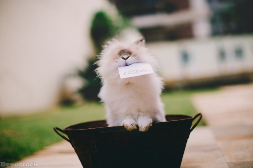 Devostock Adorable Animal Photography Lionhead Rabbit 4k