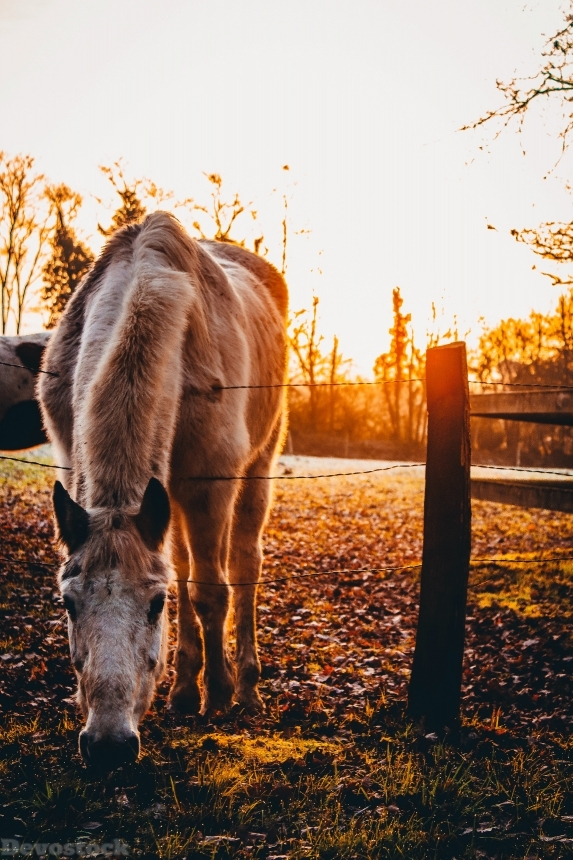 Devostock Agriculture Horse Animal Photography Sunset 4k