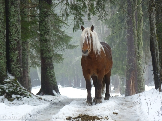 Devostock Amazing Horse Hair Snow Nature 4k