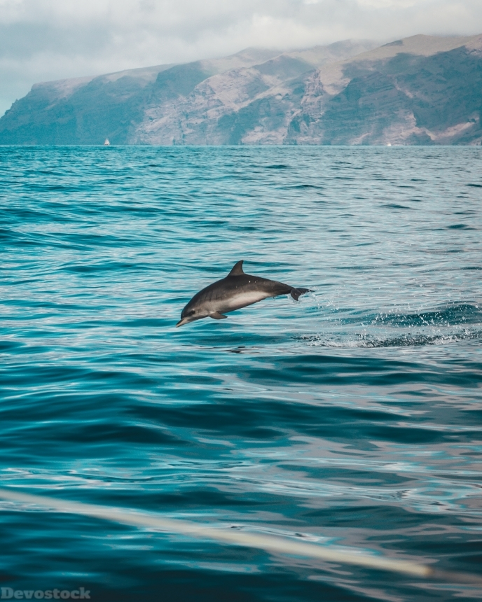 Devostock Animal Atlantic Ocean Beach Sea Dolphin 4k