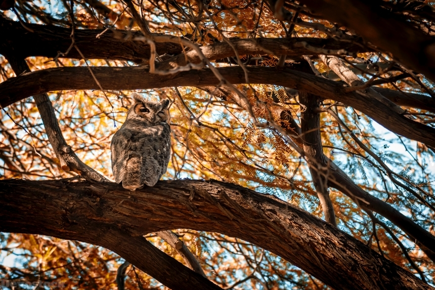 Devostock Animal Bird Photography Autumn Owl 4k