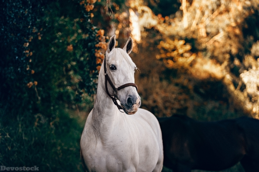 Devostock Animal Blurred Background Close Up White Horse 4k