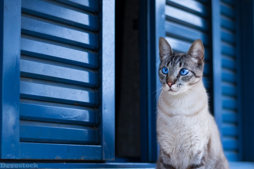 Devostock Animal Cat Door Photography Beautiful Eyes 4k
