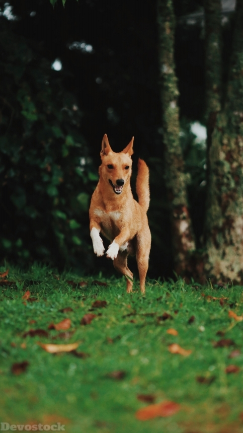 Devostock Animal Dog Photography Blurred Background Jumping Nature 4k