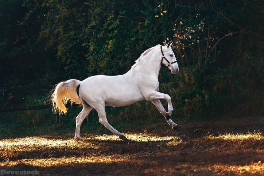 Devostock Animal Domestic Animal White Horse Running 4k
