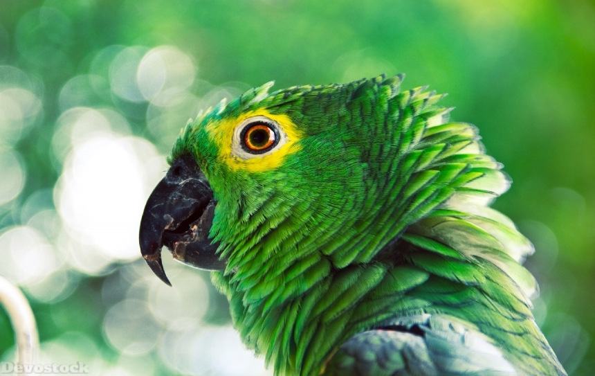Devostock Animal Green Parrot Photography Avian 4k