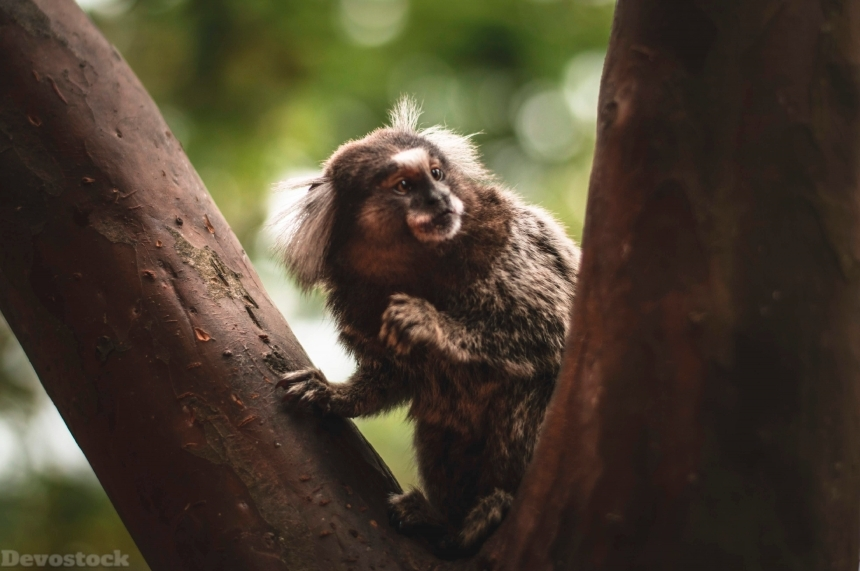 Devostock Animal Monkey Photography Ape Tree 4k