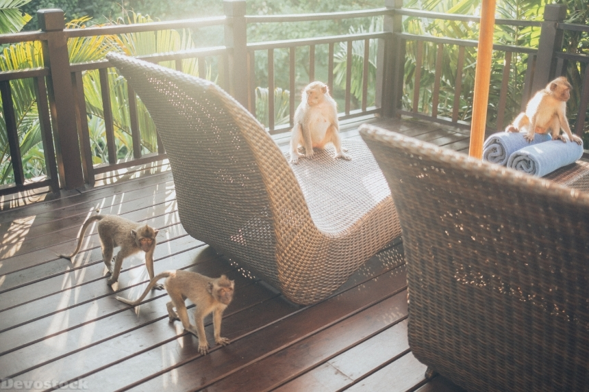 Devostock Animal Photography Animals Balcony Monkey 4k