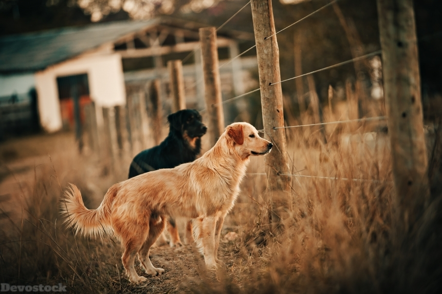 Devostock Animal Photography Animals Blur Dogs  4k