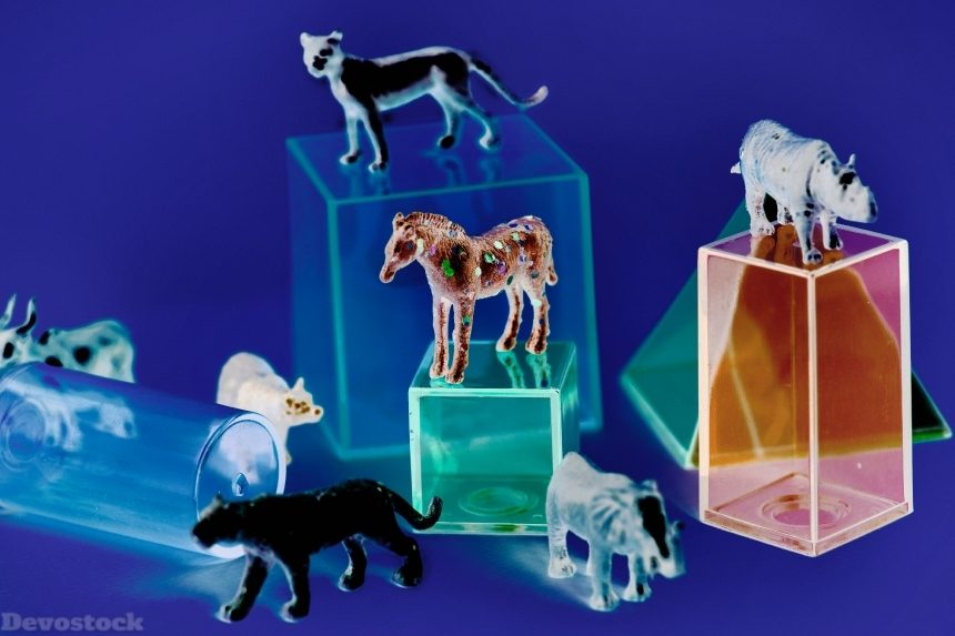 Devostock Animals Assorted Boxes 4k