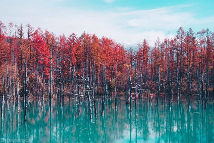 Devostock Autumn Lake Reflection Trees To 4K