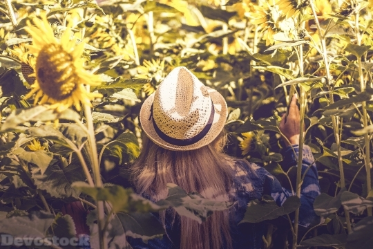 Devostock Blond Girl Hat Backside Sunflowers Field 4k
