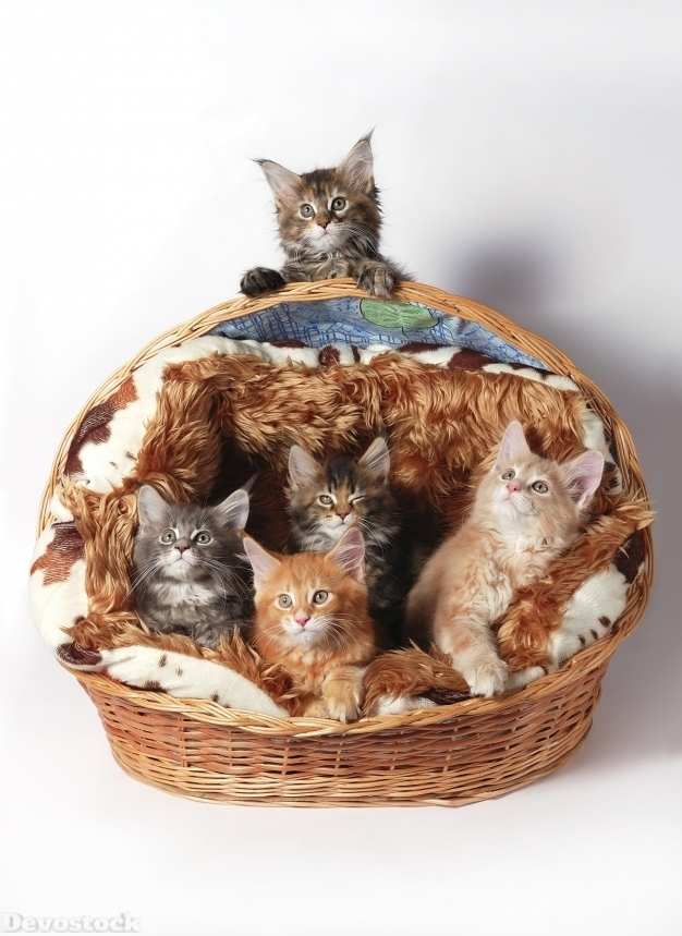Devostock Cats White Background Wicker Basket Kittens 4K