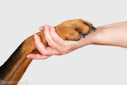 Devostock Dog Human Handshaking Friendship 4k