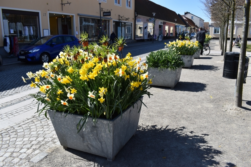 Devostock Exclusive Sweden Nature Skane Simrishamn Old Street Flowers Spring 4k