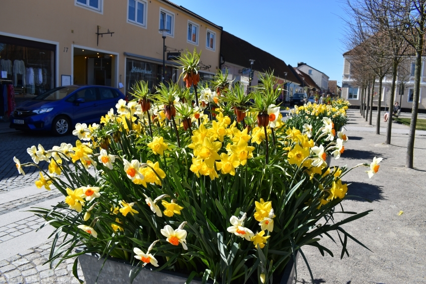 Devostock Exclusive Sweden Nature Skane Simrishamn Spring Street Yellow Flowers 4k